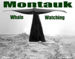 oceanwhalecomp2ty.jpg